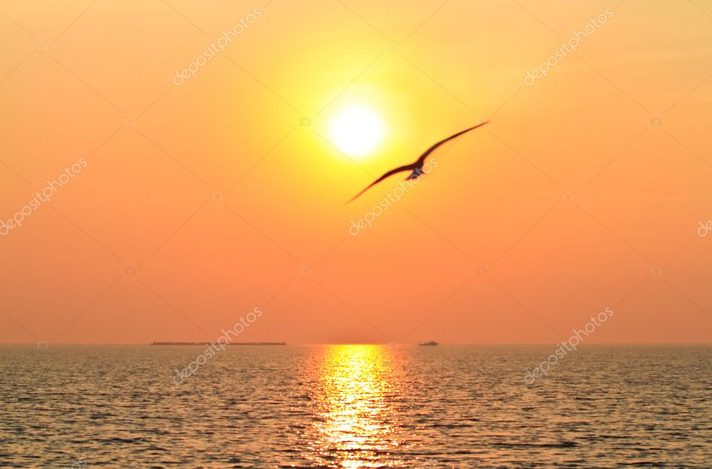 Flying bird with sunset