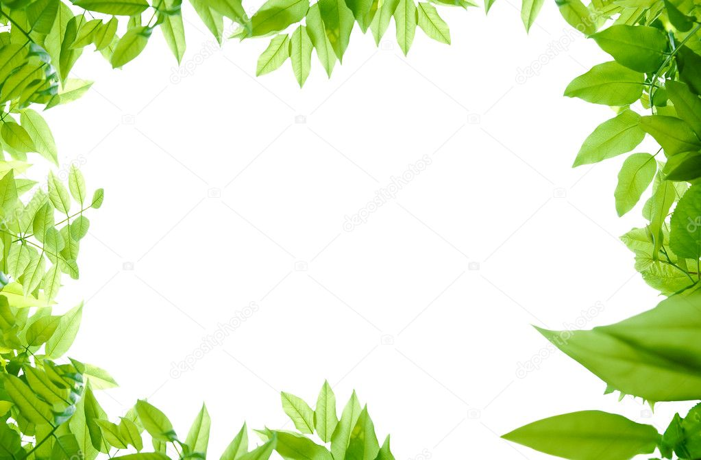 Green leaves scene