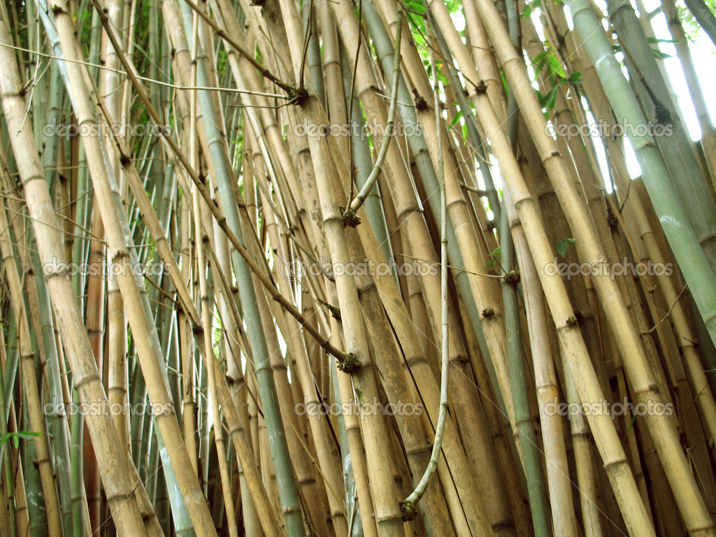Chinese Bamboo Wall Stock Photo C Natspel 3987631