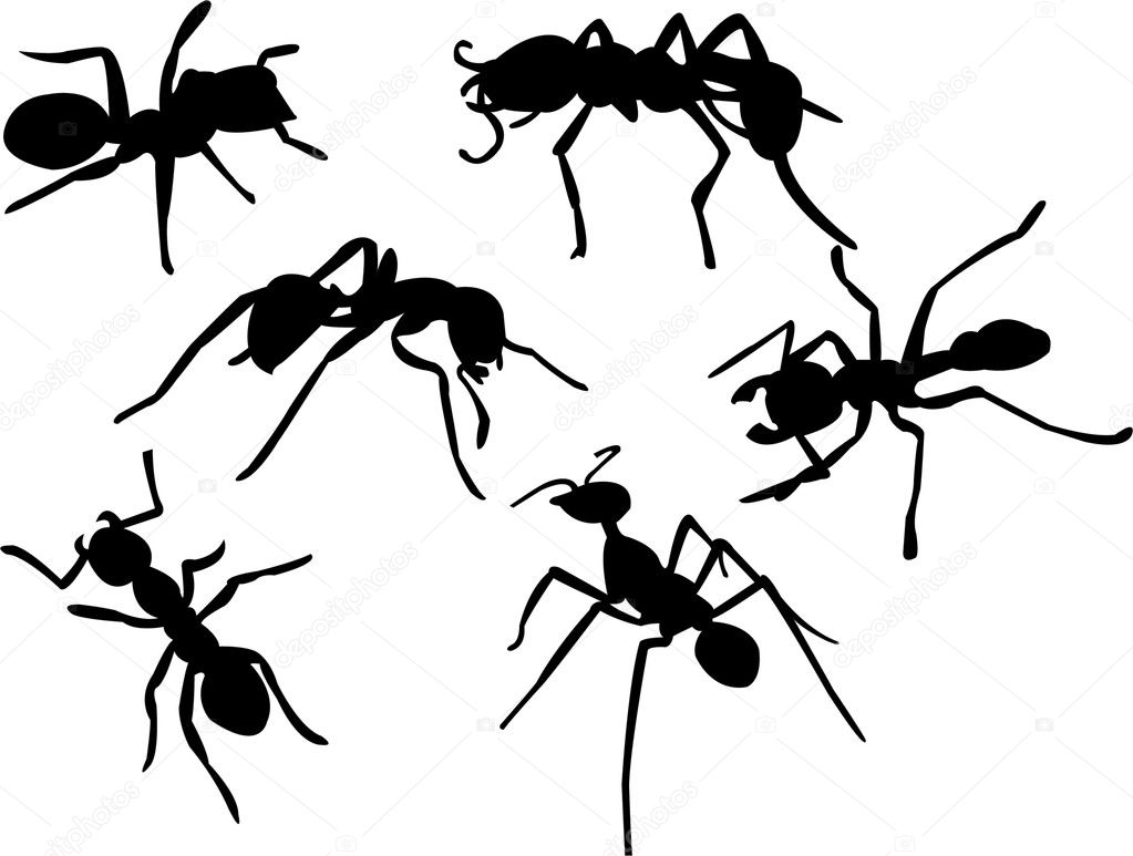 ant u2014 stock vector paunovic 3929146