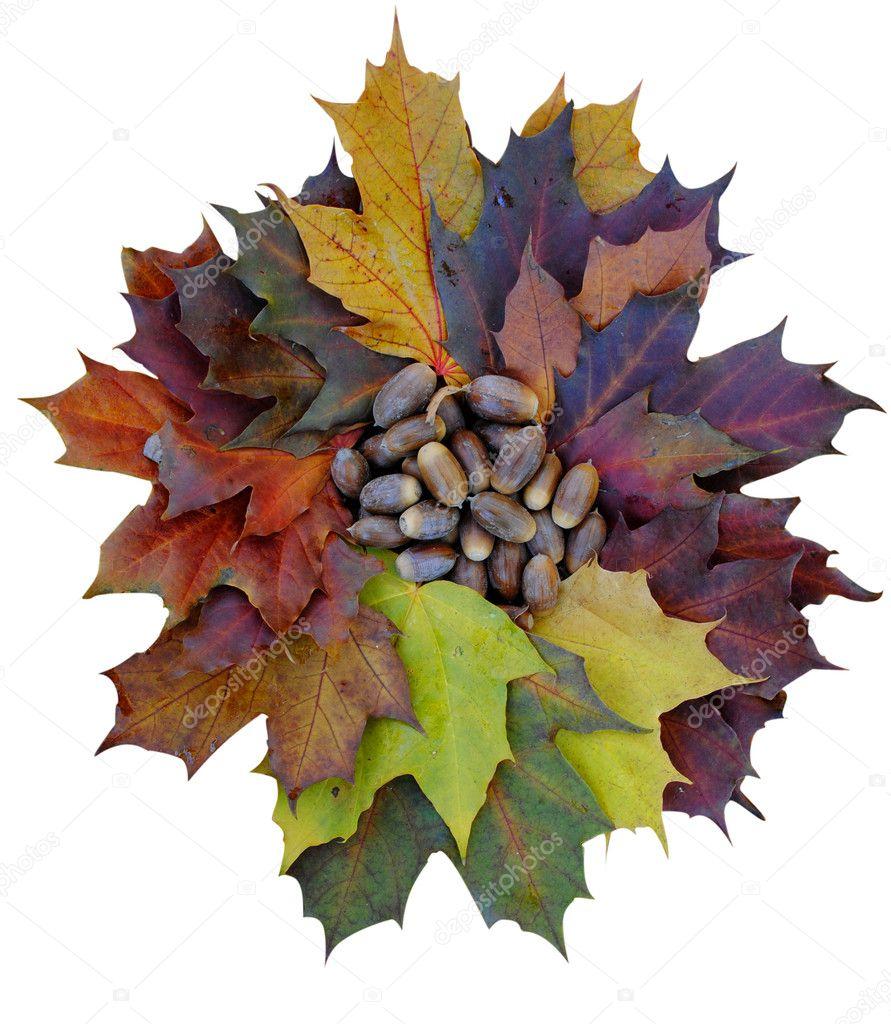 Eicheln Auf Ein Ahorn Blätter Bettwäsche Stockfoto Katsov 4040414