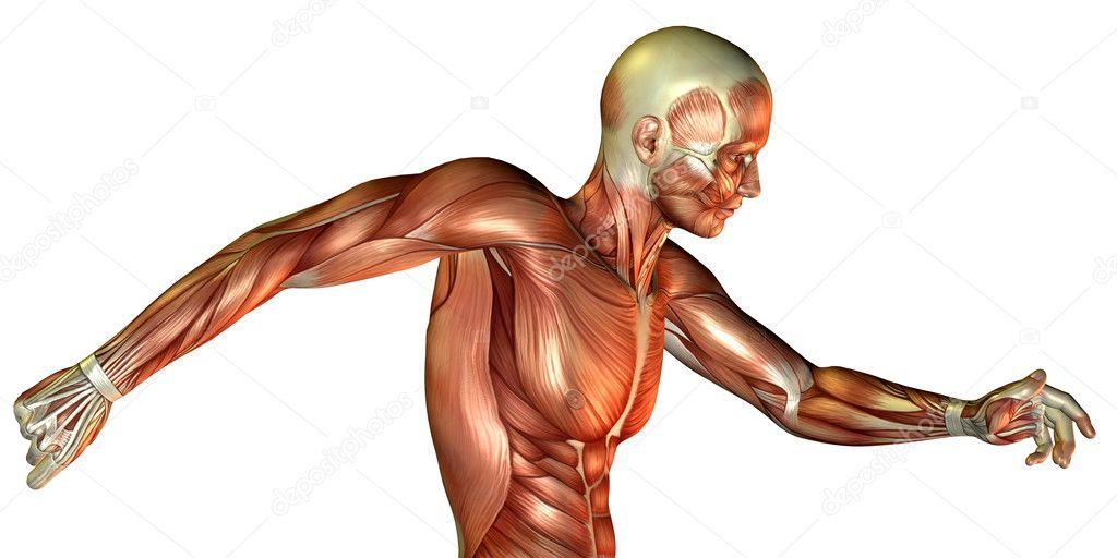 estudio del movimiento del torso masculino — Fotos de Stock ...