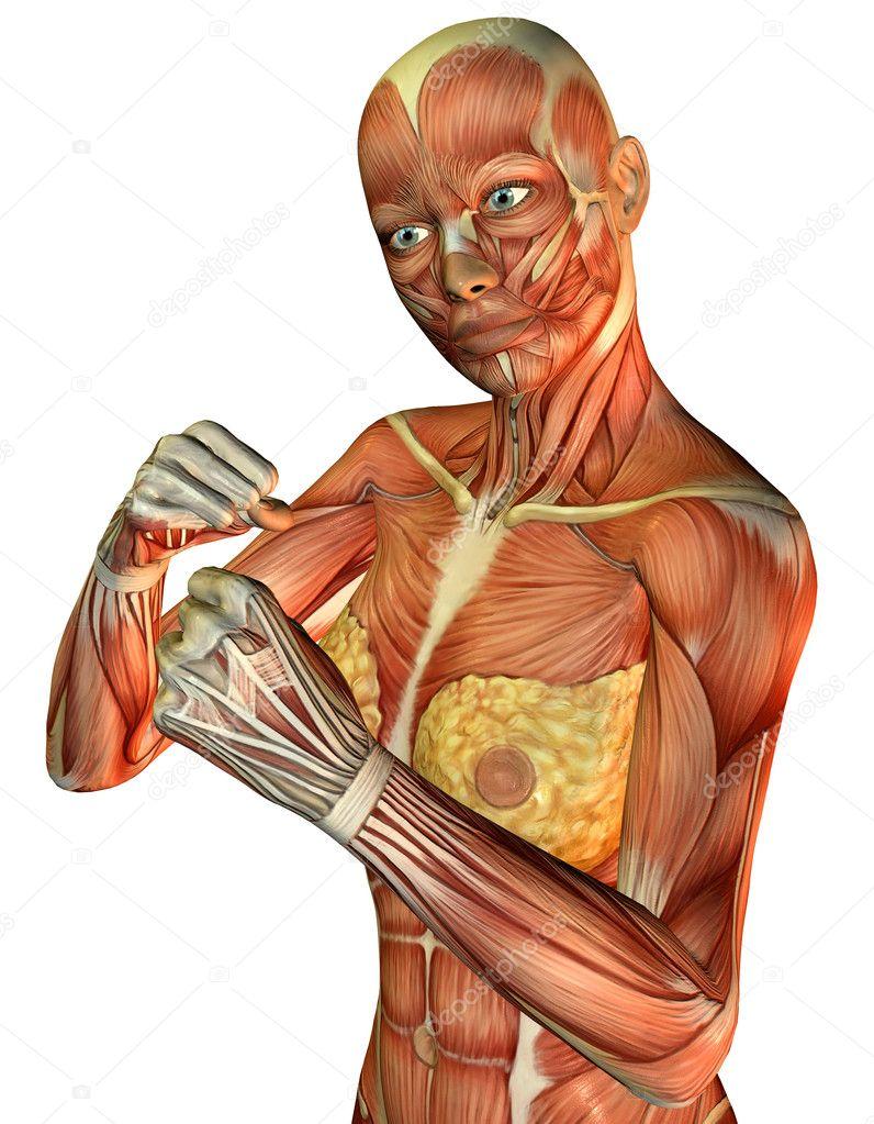 Muskel sportlich weiblicher torso — Stockfoto © DigitalArtB #4024954
