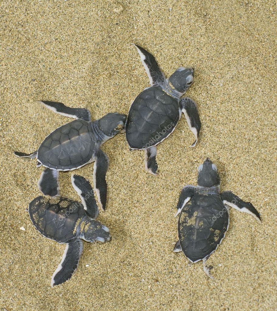Turtles give birth