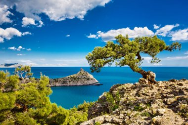 Pine on the cliff, sea, Crimea