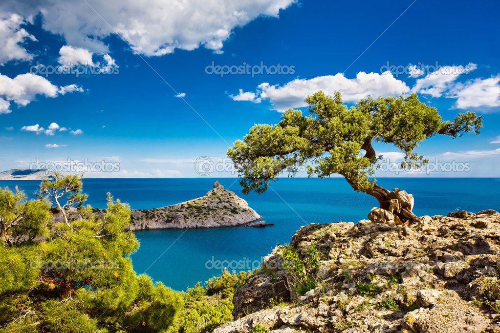 Фотообои Pine on the cliff, sea, Crimea