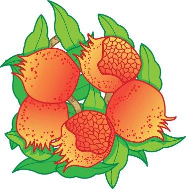 Oriental fruits