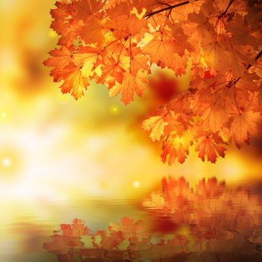 Abstract autumn maple reflection