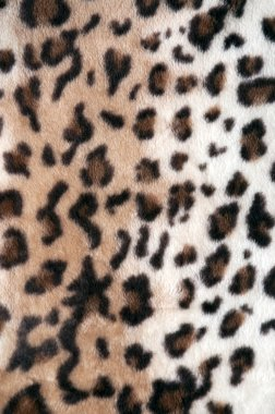 Texture of the leopard skin soft light