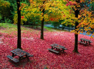Fall leaves trees at Geres national park, north of Portugal