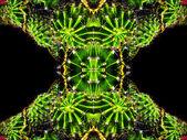 Fényképek kaktuszfélék