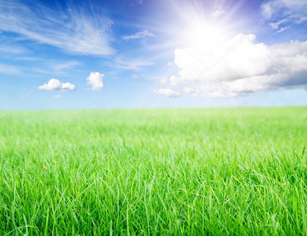 green grass field under midday sun on blue sky. — stock photo