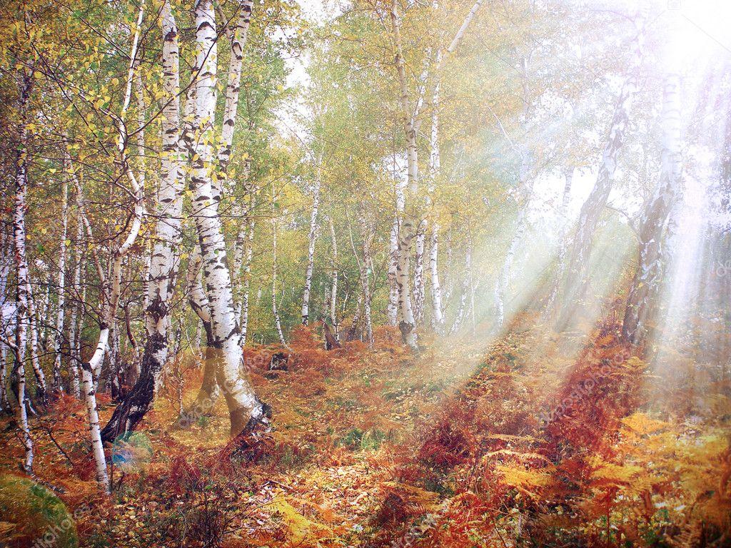 Autumn forest pastel