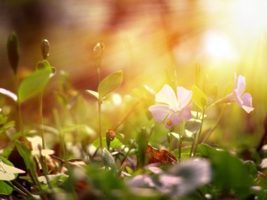 Wild flower under the sunshine stock vector