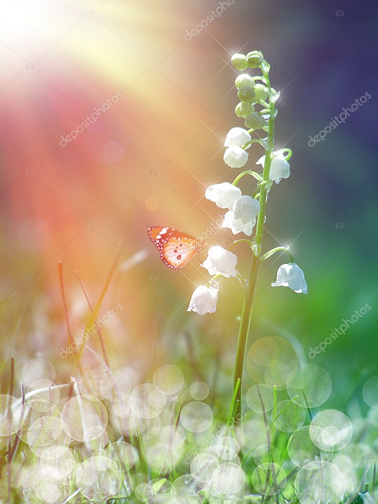 Lily of the valley under the sunshine