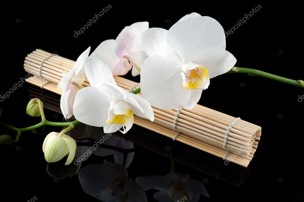 White orchid and bamboo mate