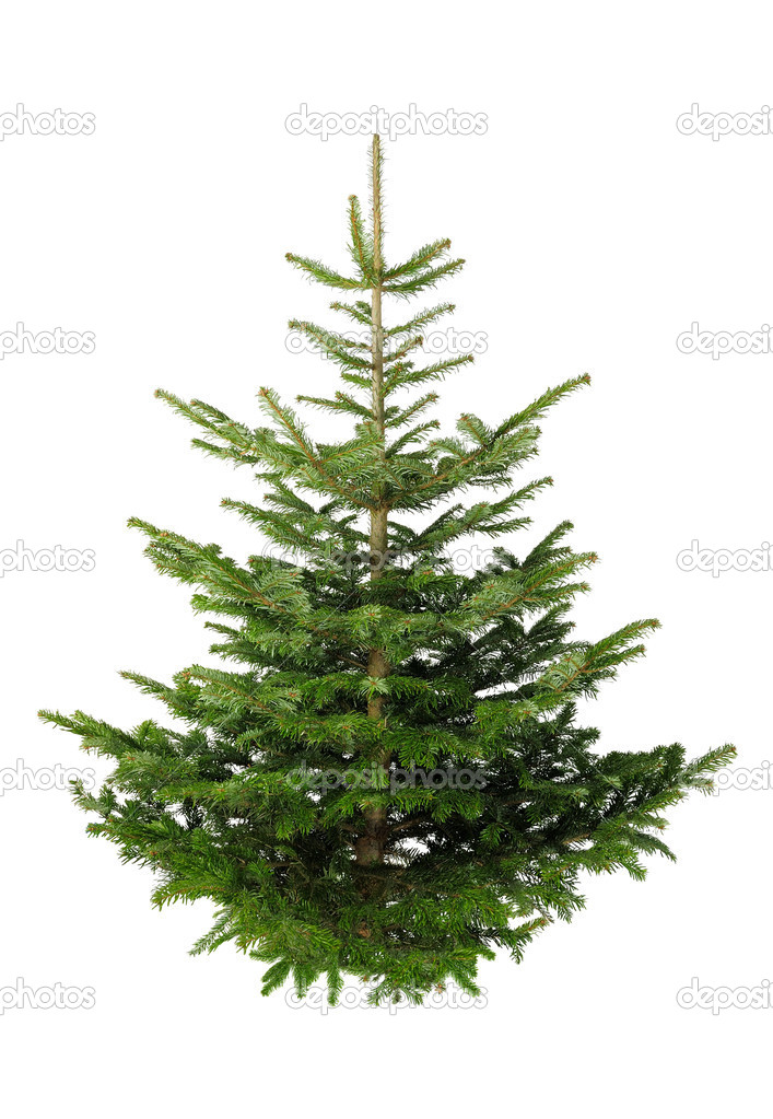 Christmas Trees Without Ornaments christmas tree without ornaments — stock photo © smileus #4305102