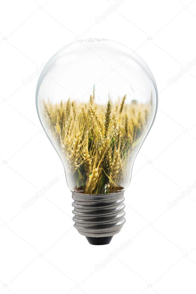 Grain bulb