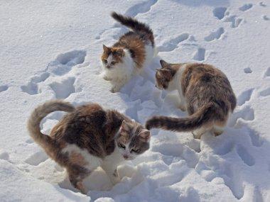 Cats happy snow