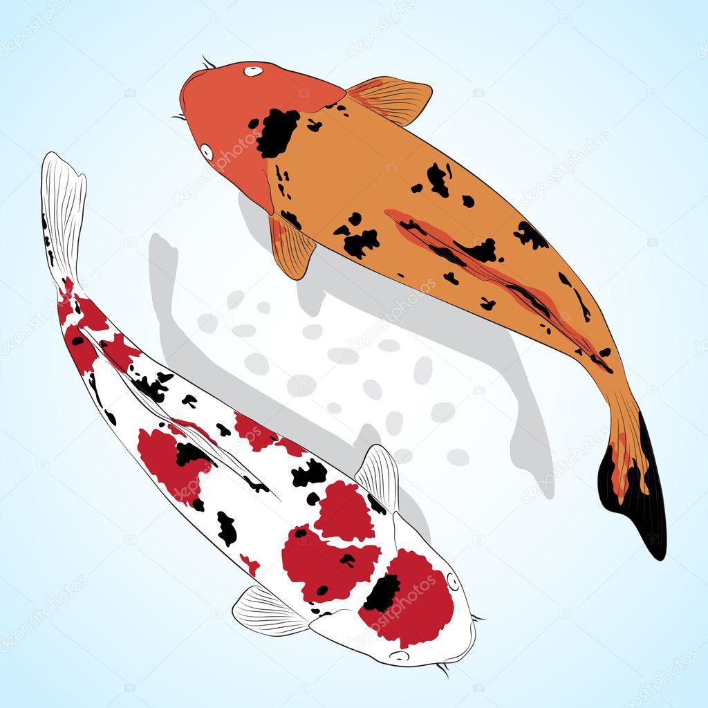 carpa pez koi vector tarjetas de felicitacin u ilustracin de stock