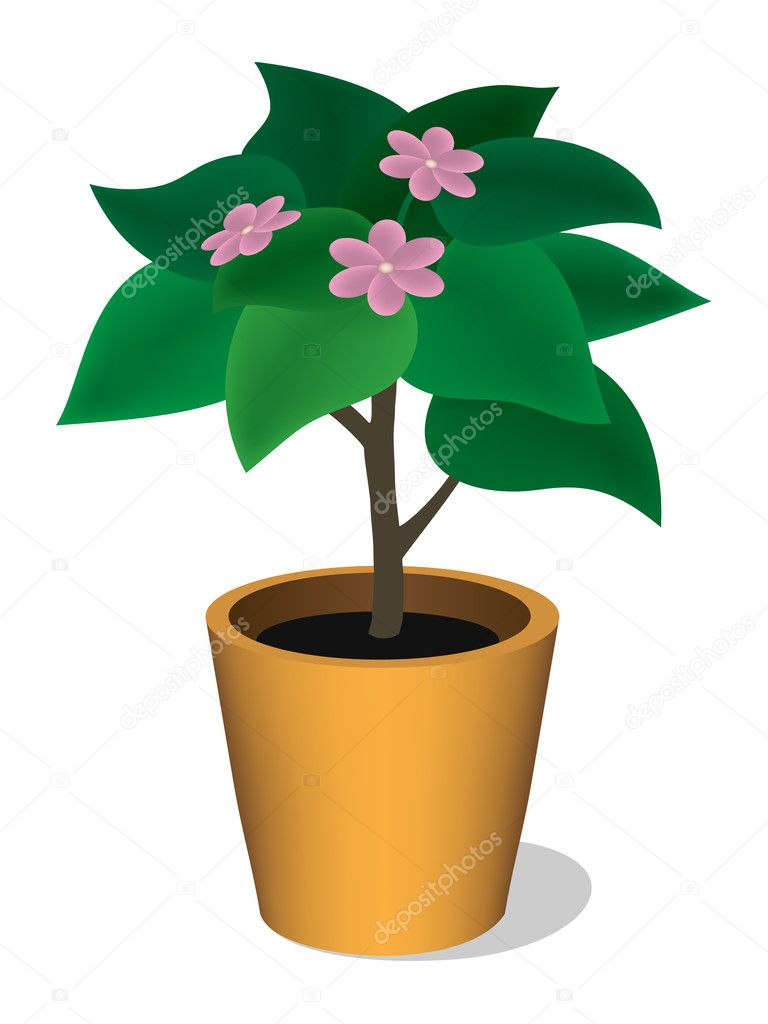 Plant in a pot with pink flowers