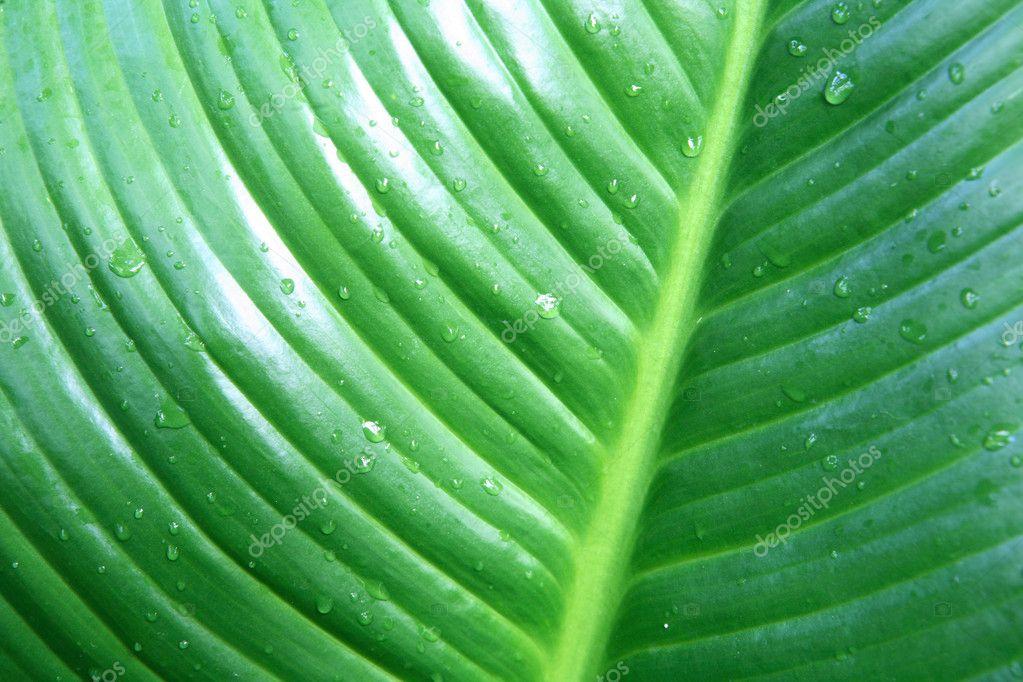 Leaf. A plant