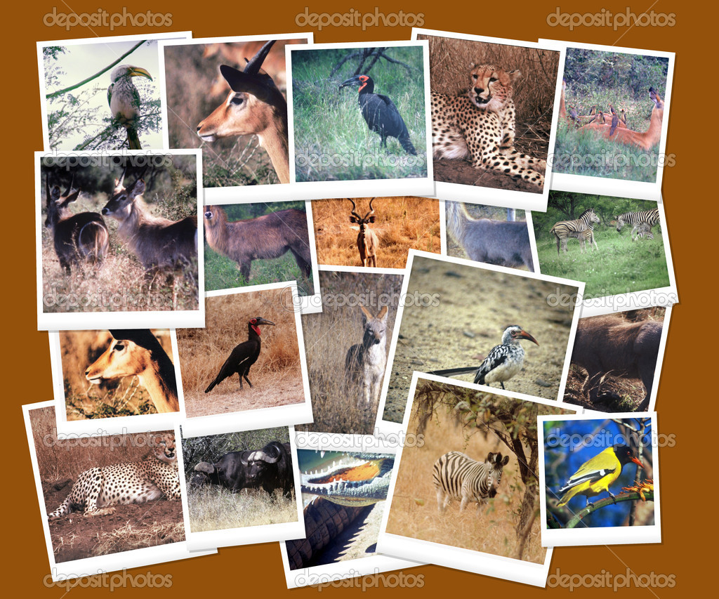 South African Wild Life Collage