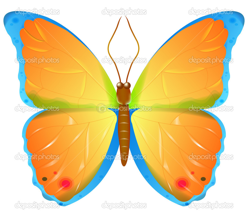 color vector butterfly u2014 stock vector ashumskiy 4374150