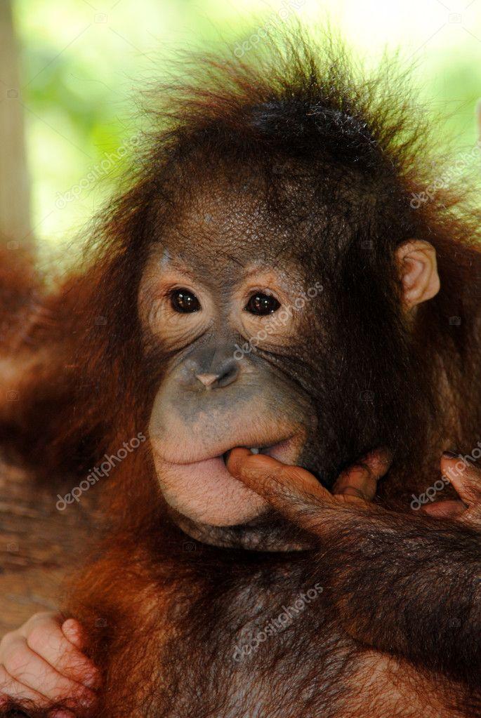 Posing chimp