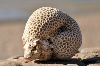 The hardened coral on sand