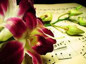 Orchidee di notte 1