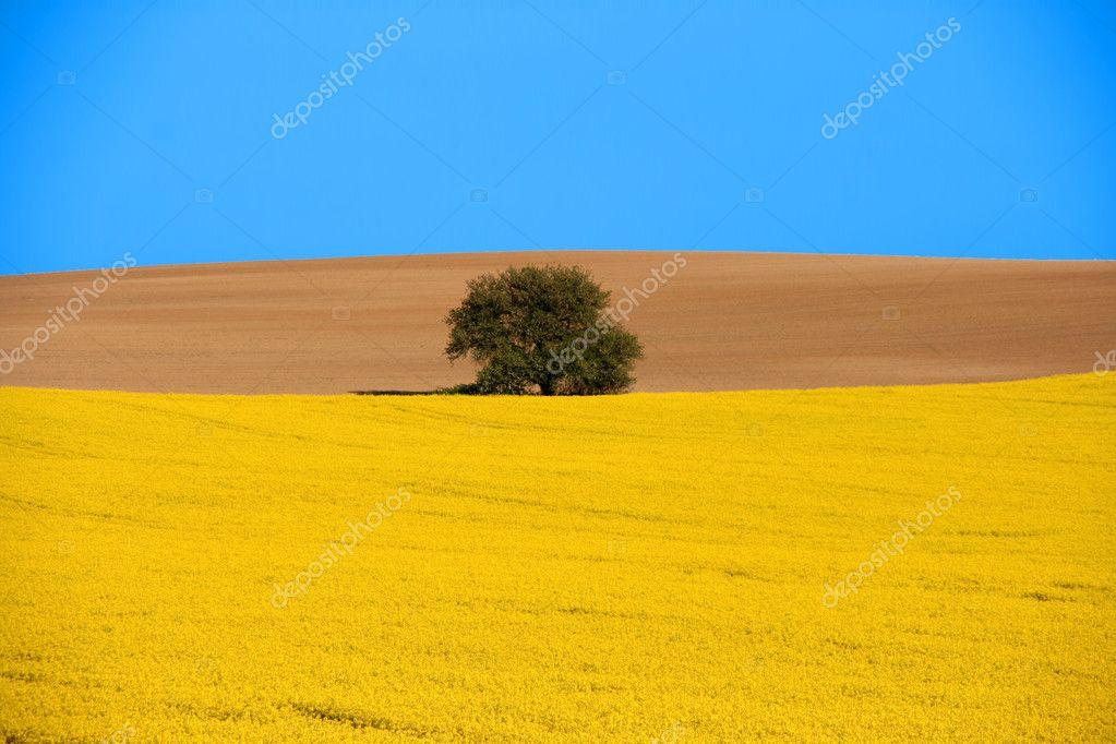 Rural scenic landscape