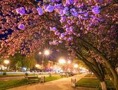 Fotografie noční městské pohled s japonská třešňový květ
