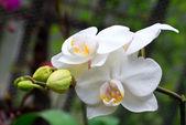 Fotografie orchidej květina