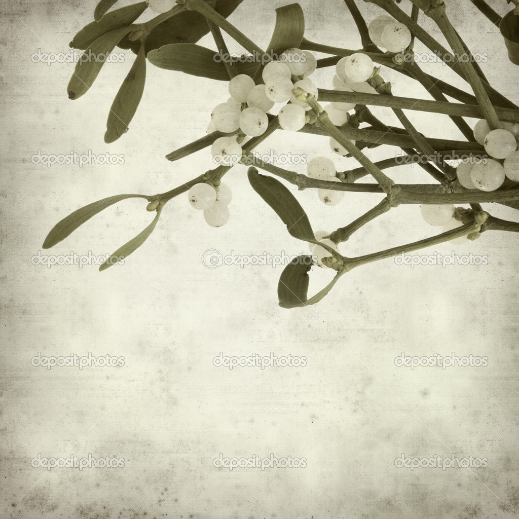 Textured old paper background with Mistletoe with white berries