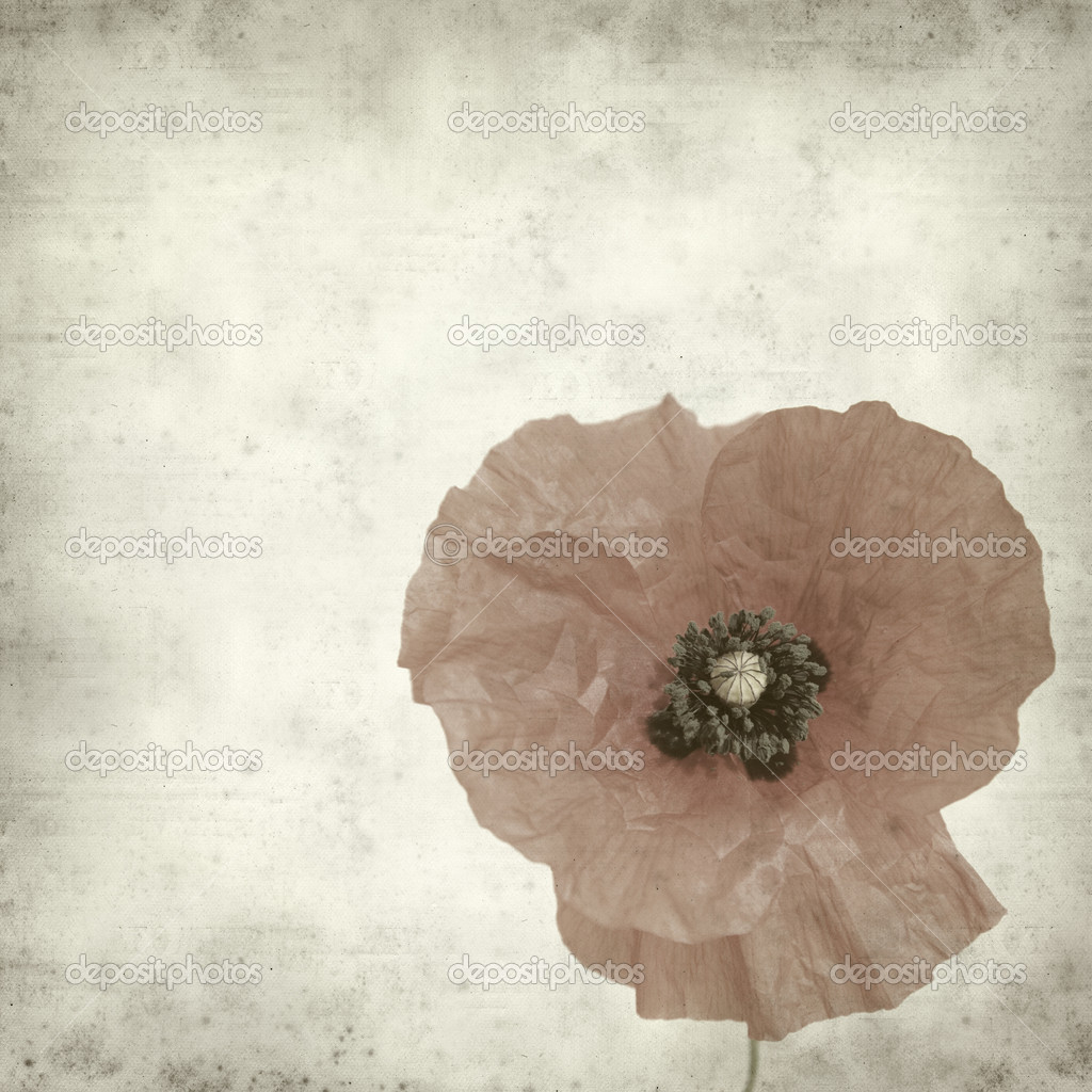 Textured old paper background with poppy flower