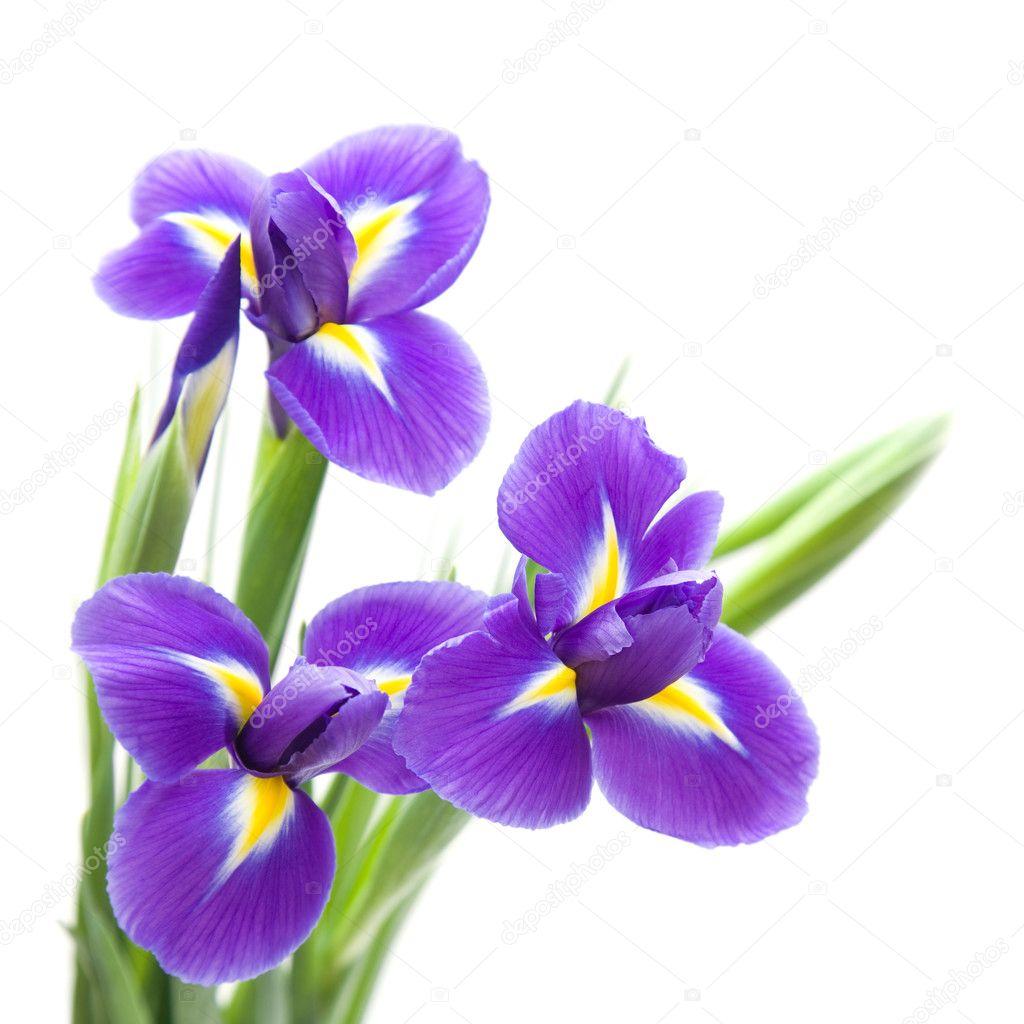 Шаблон с фиолетовый