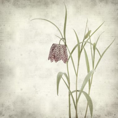Textured old paper background with fritillaria