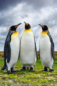 Three King Penguins