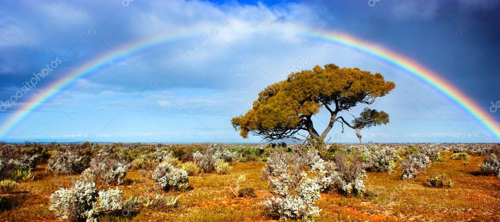 Rainbow Glory