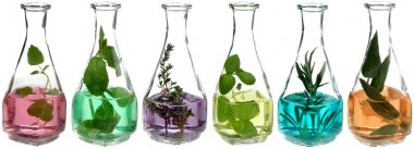 Herbs in glass bottles