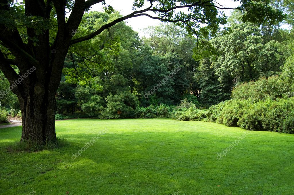 Lawn in a botanical garden