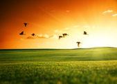 Fotografie feld von gras und fliegenden vögeln