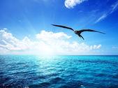 Fotografia oceano e cielo perfetto