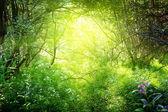 Fotografie slunečný den v hlubokých lesích