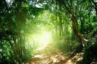 """Картина, постер, плакат, фотообои """"Грунтовая дорога в джунглях Доминиканской"""", артикул 4492494"""