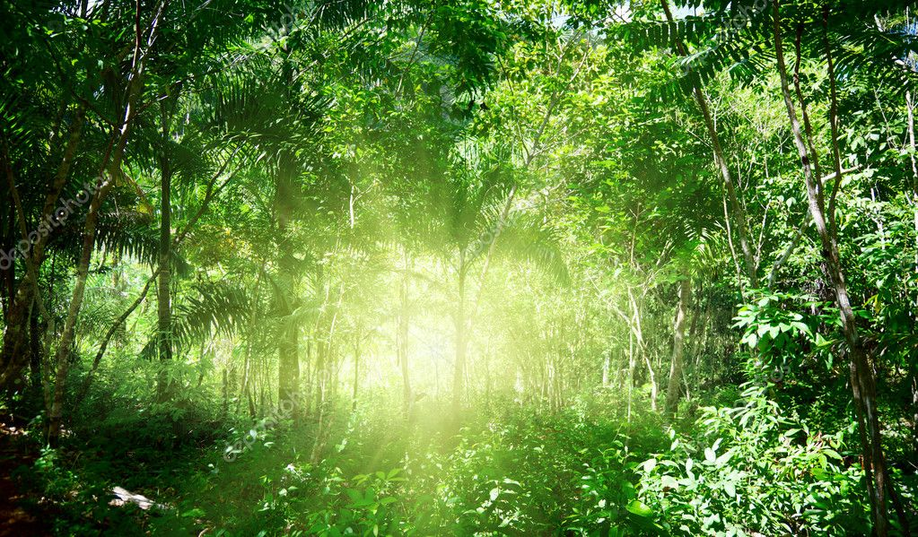 Sunlight in jungle of Dominican