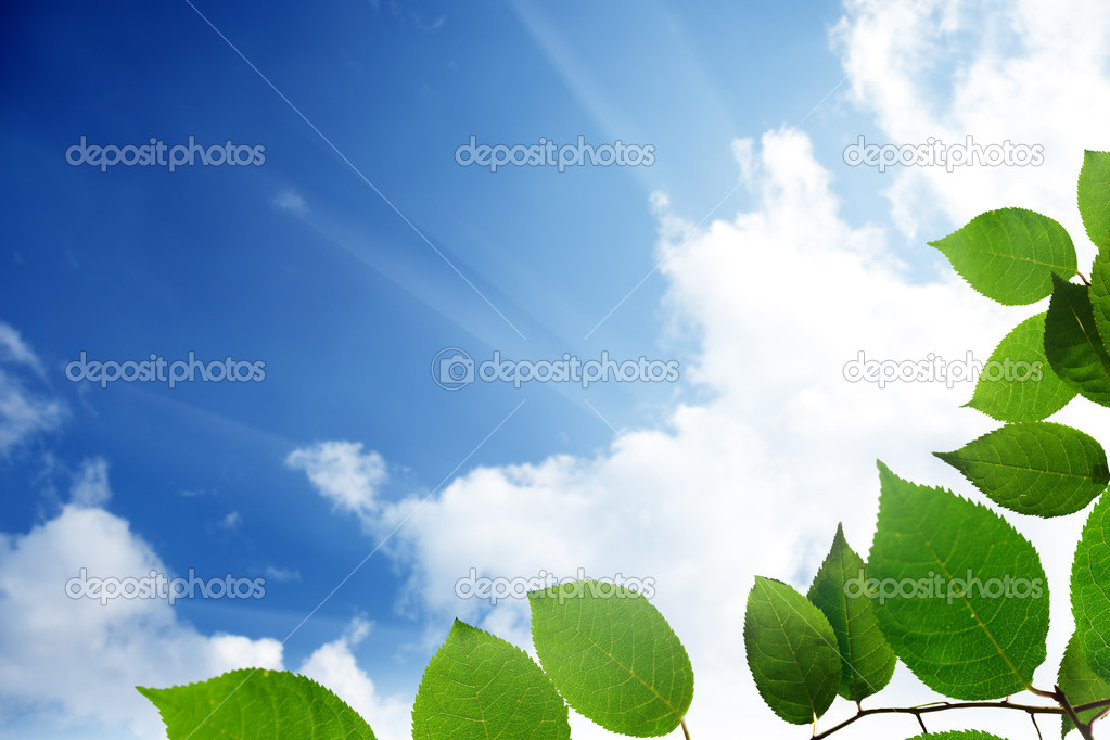 Green leaves and sky