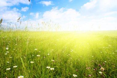 Field of summer flowers
