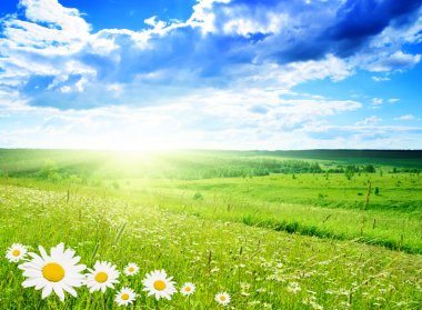 Field of daisies and perfect sky stock vector